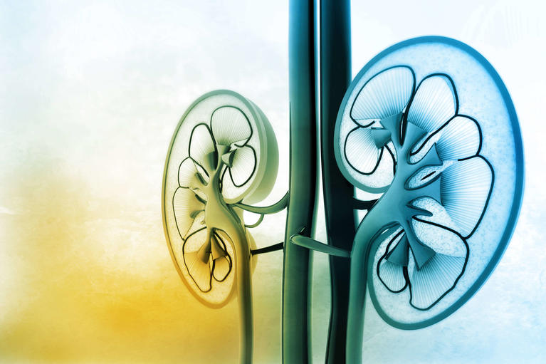 Kidney Conditions and Transplant