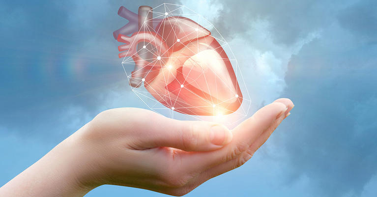 Heart Concept in Human Hand