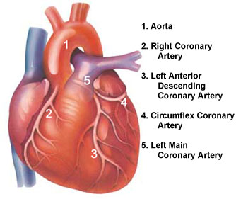 Coronary Arteries image