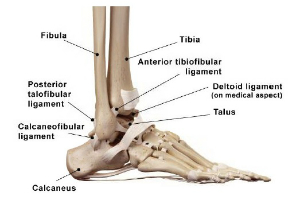 ankle sprains Ankle Arthritis Diagram ankle diagram